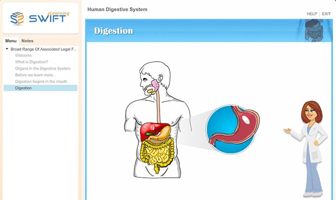 Human-digestive-system