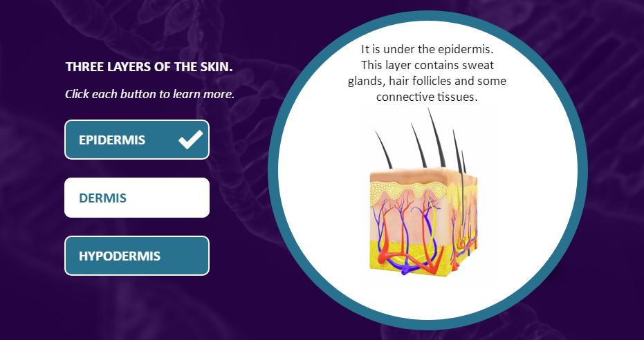 Human Anatomy Skin 4